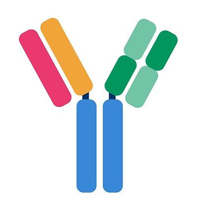 RBX1 Rabbit polyclonal Antibody IgG