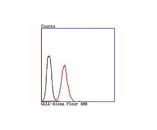 GCLC Recombinant Rabbit monoclonal Antibody IgG