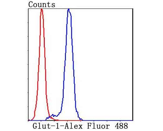 Glut-1 Rabbit polyclonal Antibody IgG