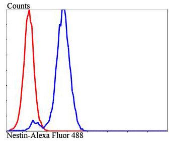 Nestin Rabbit polyclonal Antibody IgG