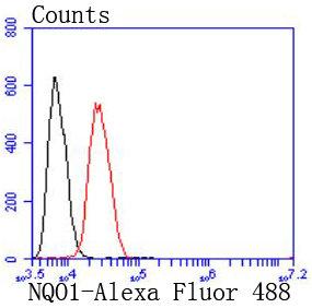 NQO1 Recombinant Rabbit monoclonal Antibody IgG