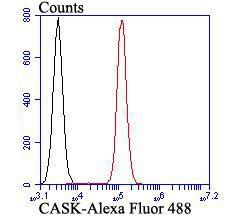 CASK Rabbit polyclonal Antibody IgG