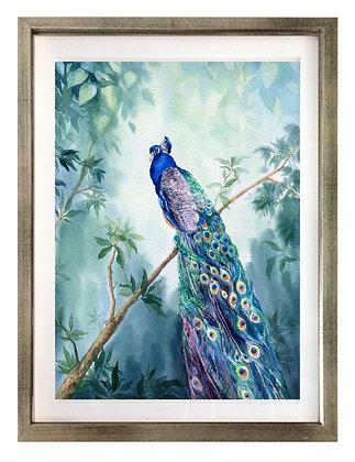 Pavo real azul / Desde 25.000 c/u