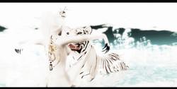 ~ Tigεr & Dragon ~  *1 @Black Kite