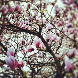 Flickr - ~ Spring'Heart ~