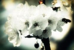 Flickr - ~ Pollinisation ~