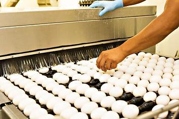 UEP-Egg-Wash.jpg