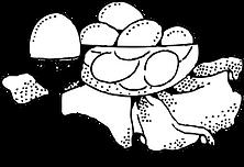Egg Illustration3.png
