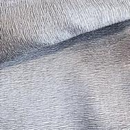 Silver Rivieria