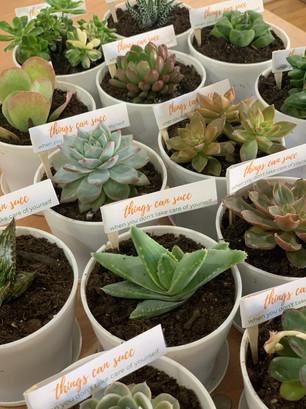 Self Care Succulents