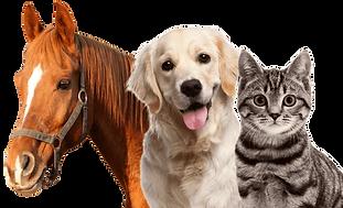 HORSE-DOG-CAT.png