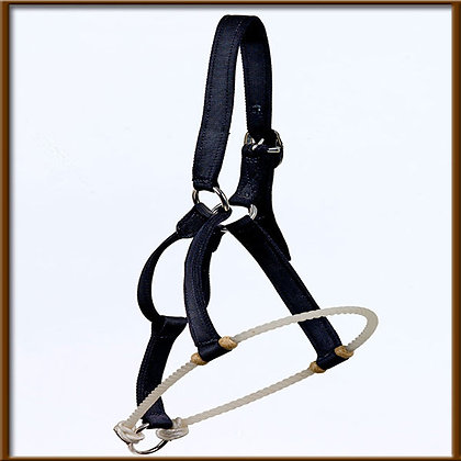 Lunging Halter  Designed by Benny Guitron