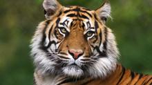 Animal, Insect & Arachnid Reading Index