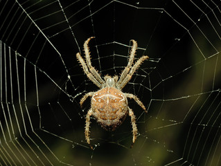Spider: We Flow with Change