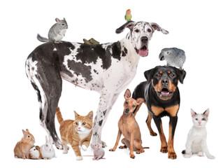 Pet Connections