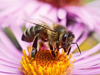 Bee: We Are Vital Partners