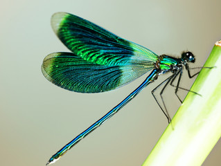 Dragonfly: Notice the Little Things