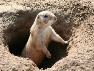 Prairie Dog: We Have A Lot To Say