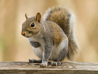 Squirrel: We Love Interacting with Mankind