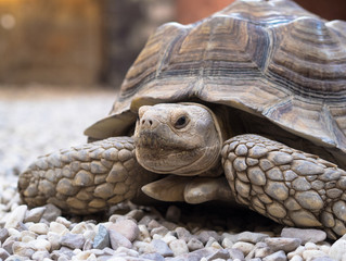 Tortoise: Man Would Do Well to Emulate Us