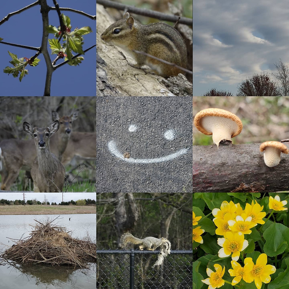 Nine photoe of nature things. A Deer, a Chipmunk, leaves, mushrooms, clouds, a smiley face, flowers and a beaver den