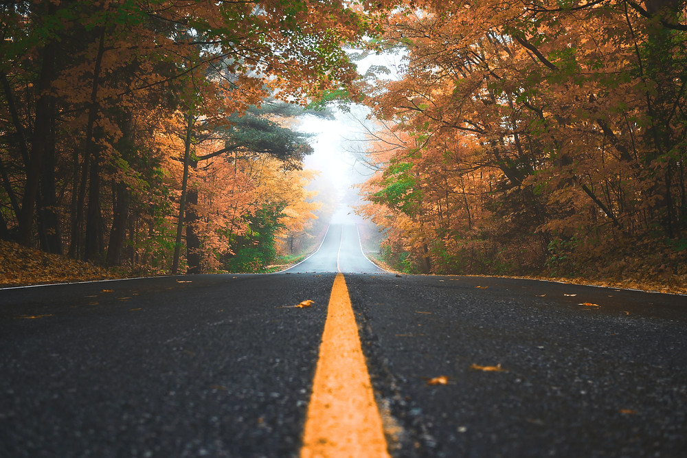 Photo of a road on a fall foggy day.