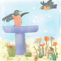 Robins in Birdbath