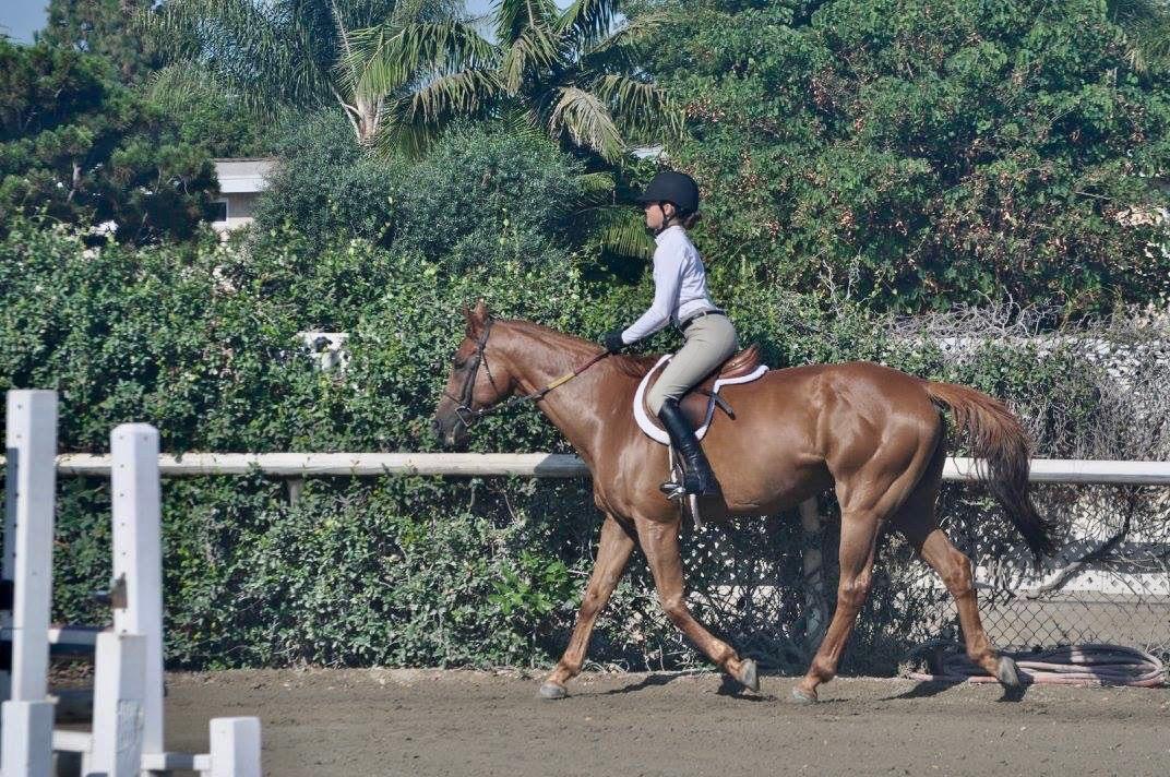 School Horse JJ
