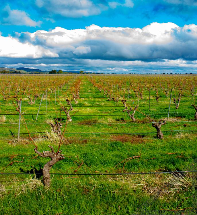 Barossa Valley South Australia SA022