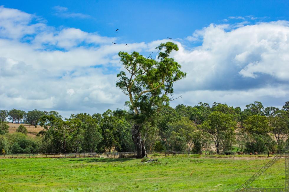 Birdwood South Australia SA027