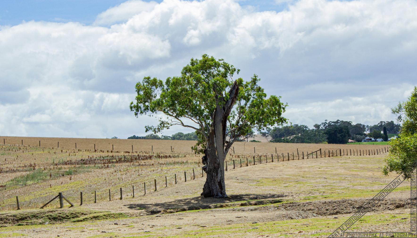 Birdwood South Australia SA028