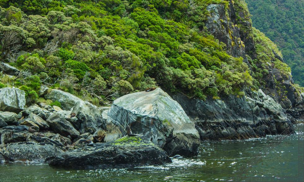 Milford Sound New Zealand NZ068