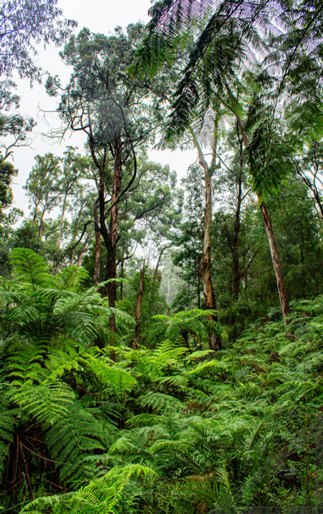 Maroondah Reservoir Park Nature Walk HV008