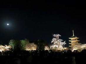 京都 東寺「東寺と桜と満月と」