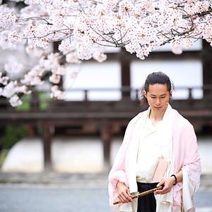 京都 本法寺 - さくらの旅路 全国ツアー 2015