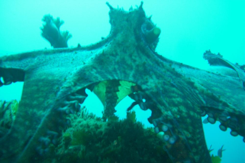 peljesac underwater
