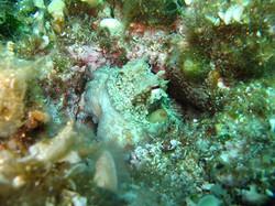 Underwater Peljesac