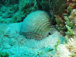 Peljesac-Croatia underwater