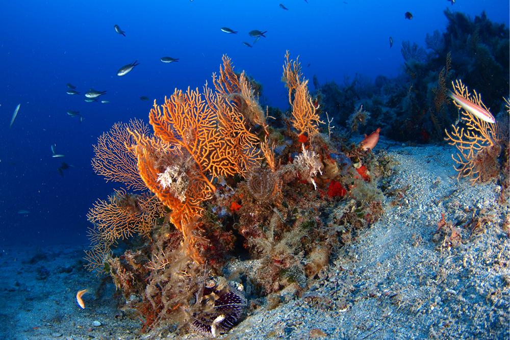 Zuljana diving