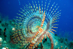 underwater zuljana
