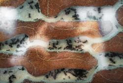 Ant Farm / Formicarium