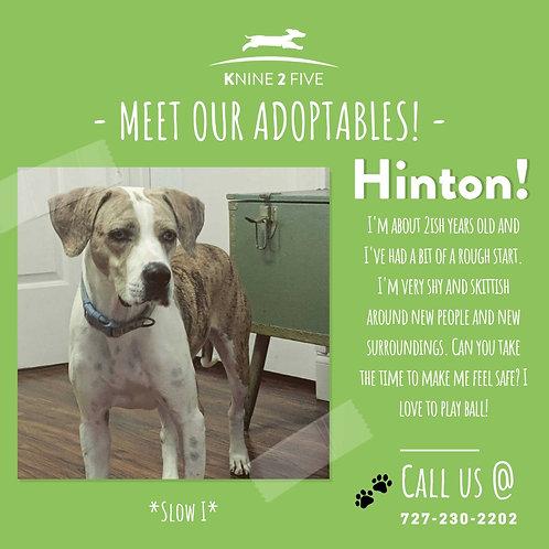 Hinton!