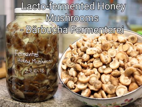 Lacto-Fermented Honey Mushrooms - Bärbucha Fermenterei