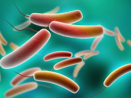 Einfach und kurz über Darmmikrobiom…