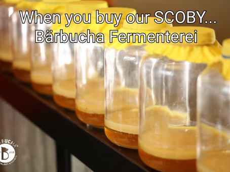 When you buy our SCOBY...