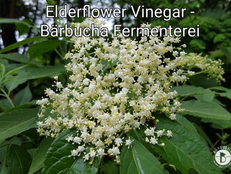 Elderflower Vinegar - Bärbucha Fermenterei