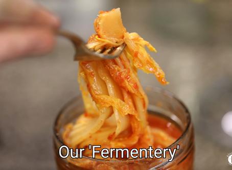 Our 'Fermentery' (Fermenterei)