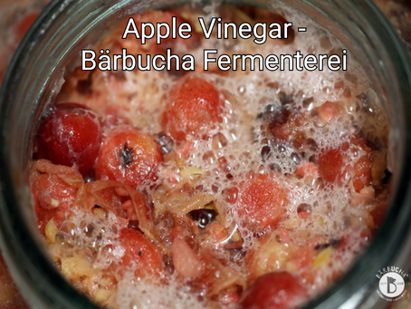 Apple Vinegar - Bärbucha Fermenterei