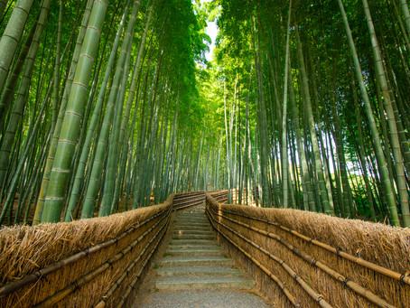映える穴場の竹林!?竹林がある嵐山のお寺「あだし野念仏寺」をご紹介