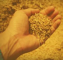 mano-con-semillas.jpg